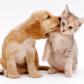 Skift af kattefoder